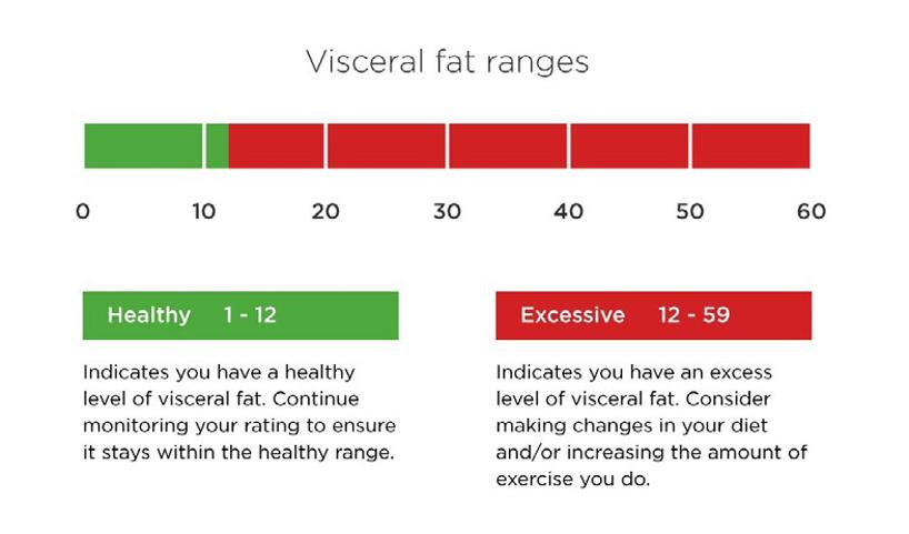 visceral-fat-ranges
